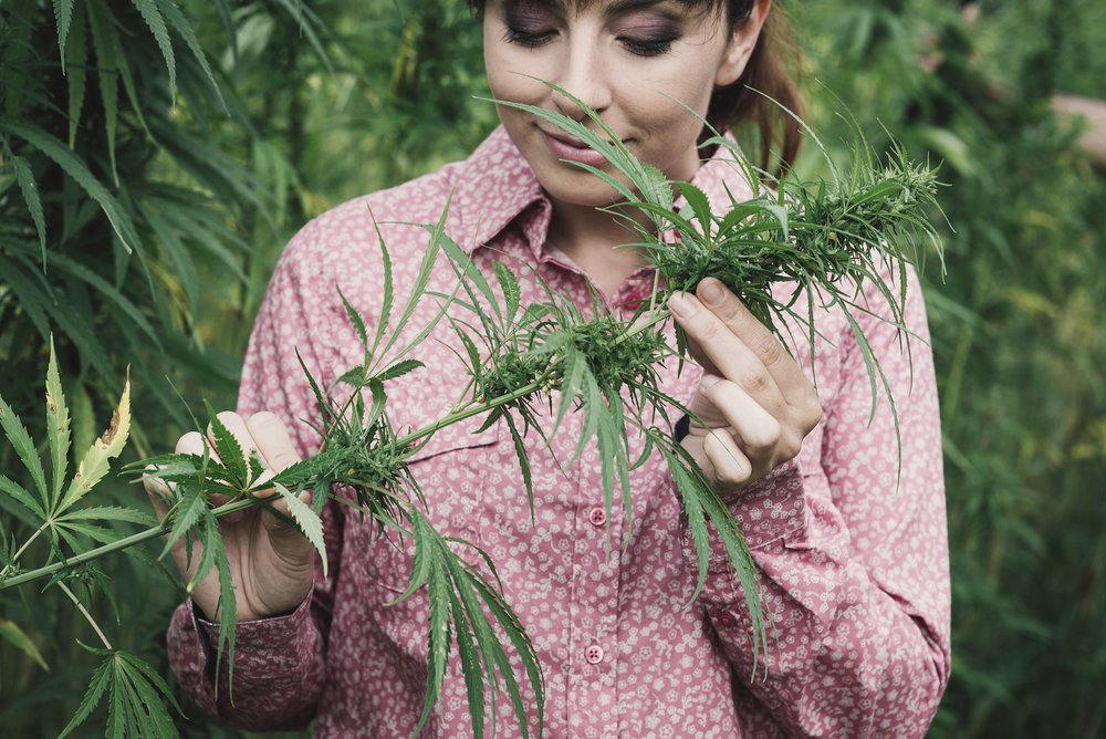 Woman smelling terpenes of a hemp plant