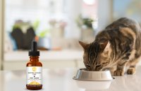 Beautiful cat eating with CBD Pet Care oil