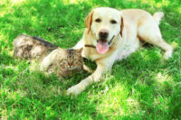 dog and cat cuddling on grass cbd for healthy pets