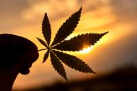 Cannabis Delta-9 vs Delta-8 THC