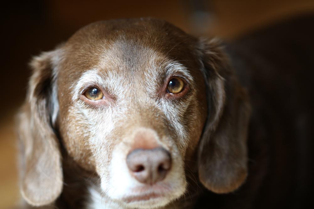 old dog saving grace cbd pet care